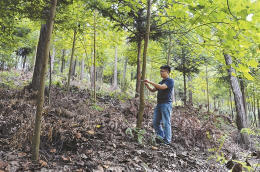 广西超额完成国家下达的年度造林任务
